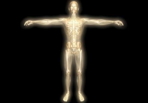 Para qué sirve el esqueleto humano
