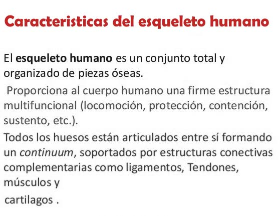 Características del esqueleto humano
