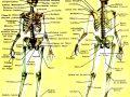 Nombres de los 206 huesos del cuerpo humano