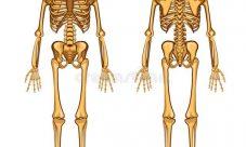 ¿Qué cantidad de fósforo contiene el cuerpo humano?
