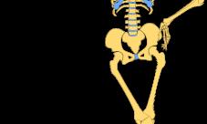 ¿Cuánto pesa el esqueleto humano?