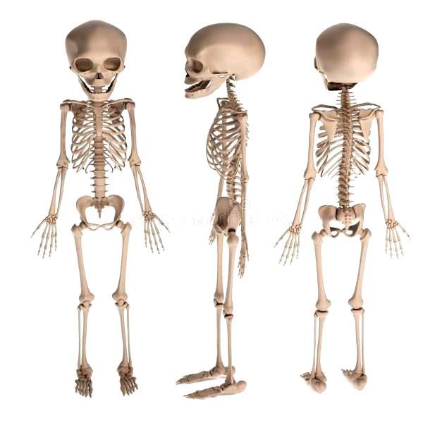 ¿Cuántos huesos tiene un recién nacido?