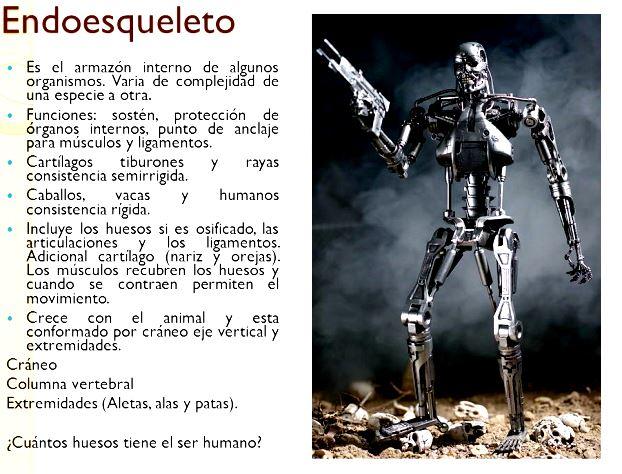 ¿Por qué el esqueleto humano es considerado como endoesqueleto?