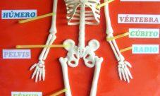 ¿Cómo hacer una maqueta del esqueleto humano?