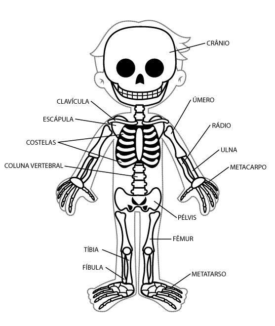 Imágenes del esqueleto humano para niños - Esqueleto humano