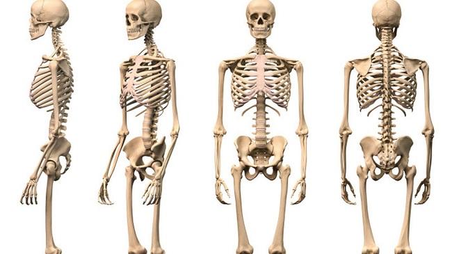 caracteristicasdeloshuesos