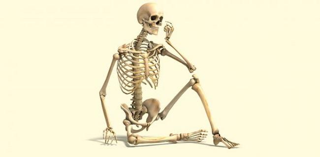 Función de los huesos