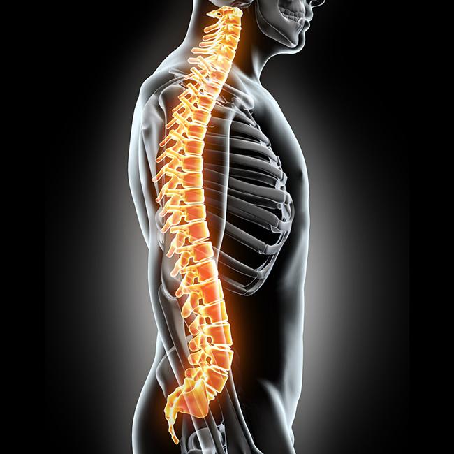 huesos-de-la-columna-vertebral
