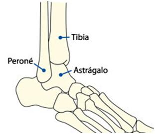 Huesos del tobillo