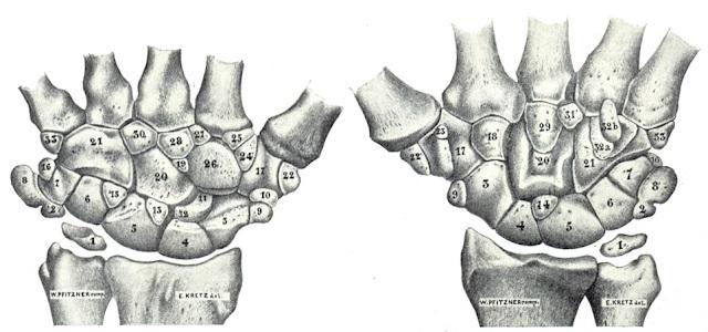Los huesos supernumerarios