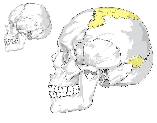 Los huesos wormianos
